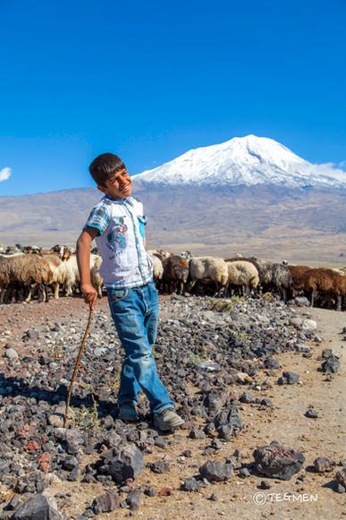 Ararat Shepherd Child Ağrı