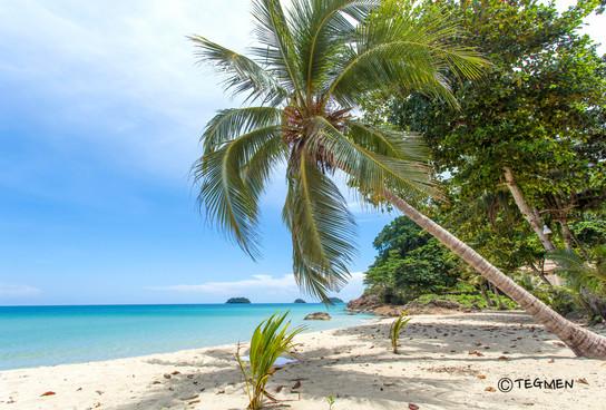 Lonley Beach and Palm Tree