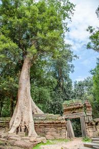 Banyan Tree and Door