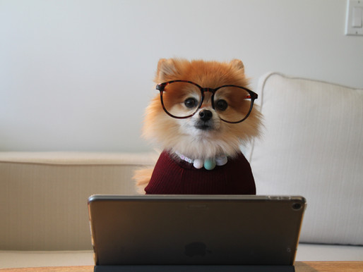 Découvrez le site de vente en ligne de la librairie [ inkipit ] !