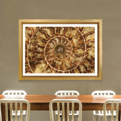 BROWN AMMONITE