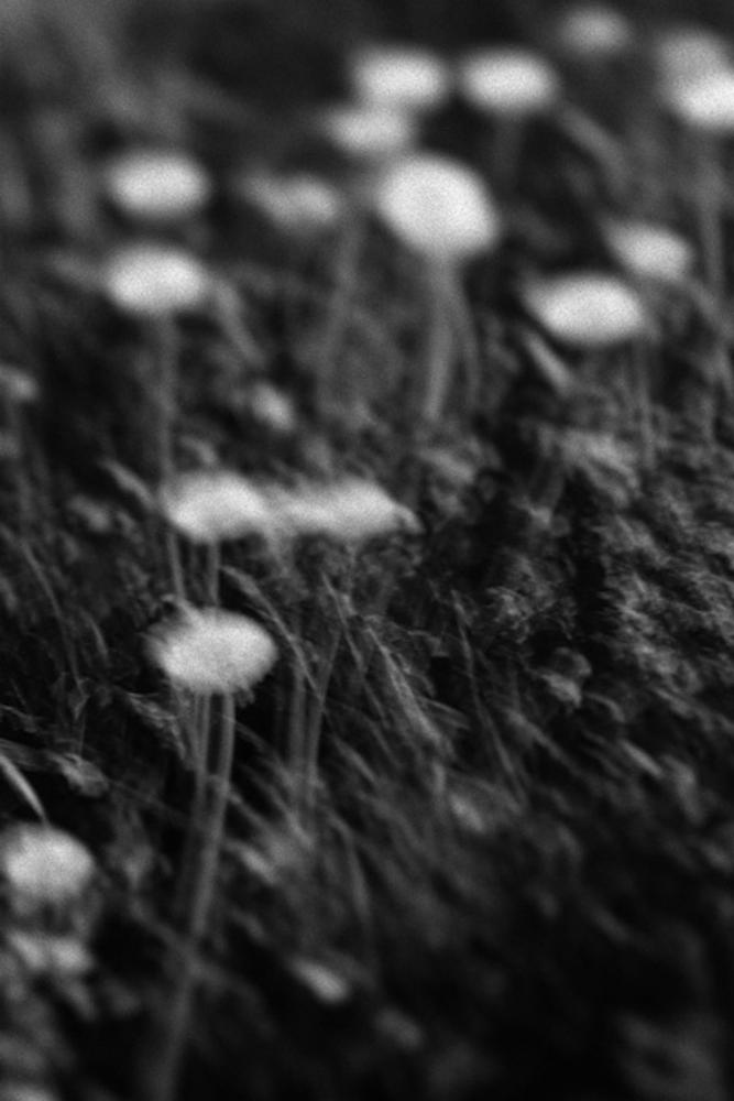 Les fleurs d'Auschwitz