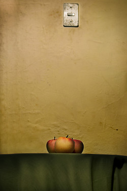 Natures mortes - Damien Guillaume