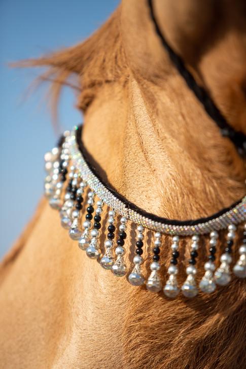 Camel Beauty(detail)