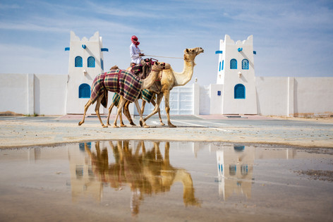 Kingdom of Camels