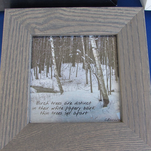 Birch Trees (Small)