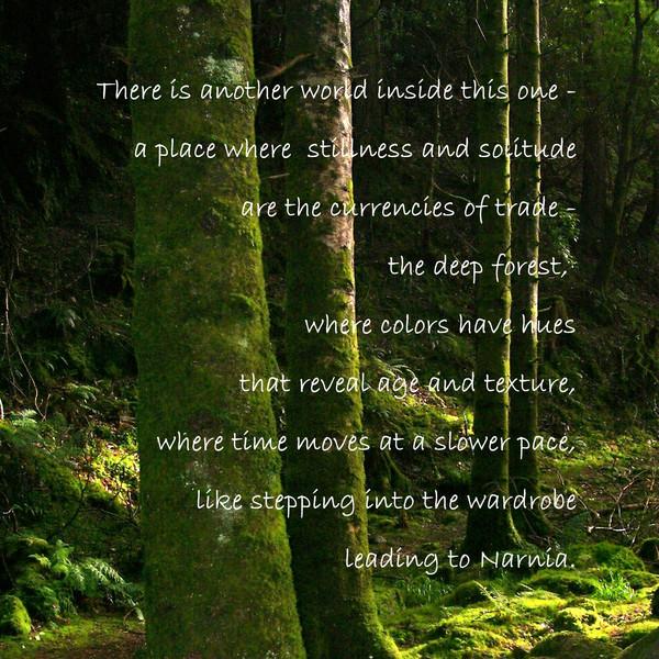 The Irish Forest
