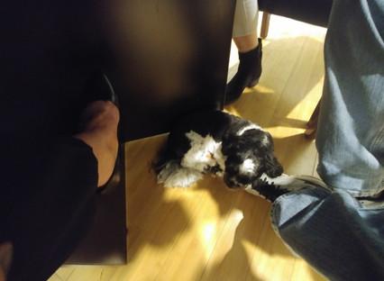 Our Expert Client Cuddler