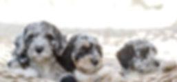 puppycollection-compressor_edited.jpg