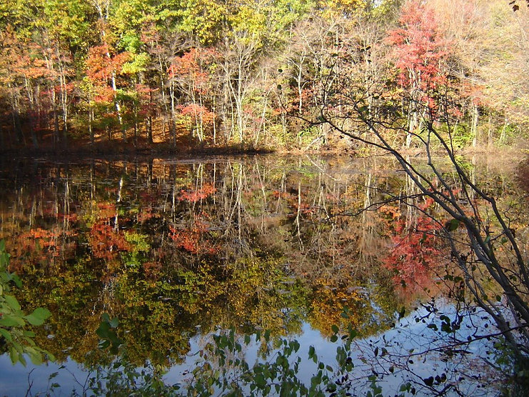 FLT Bushley pond pic.jpg