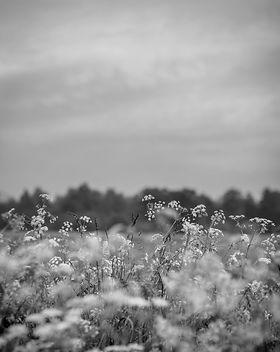 Meadow._edited.jpg
