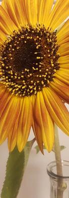 golden sunflower.jpg