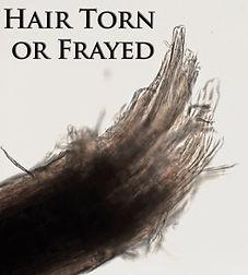 frayed or torn hair.jpg