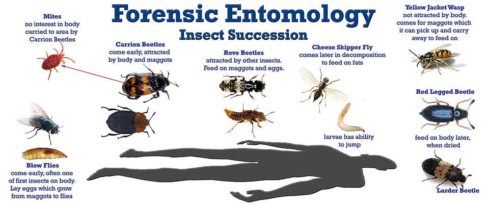 insect succession.jpg