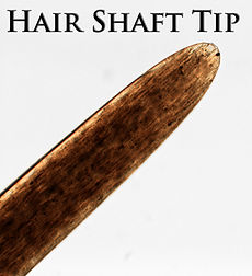 hair tip.jpg