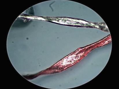 microscope view_Cotton2.jpg