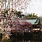 Mishima Taisha.jpg