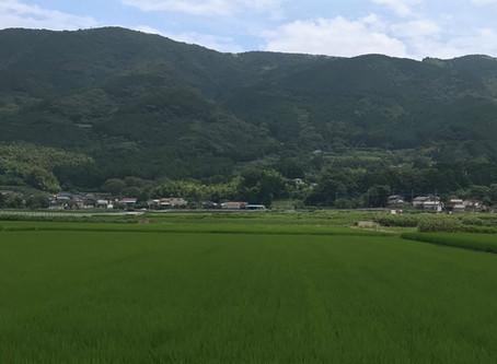 """Archetypal Scenery of Japan"""