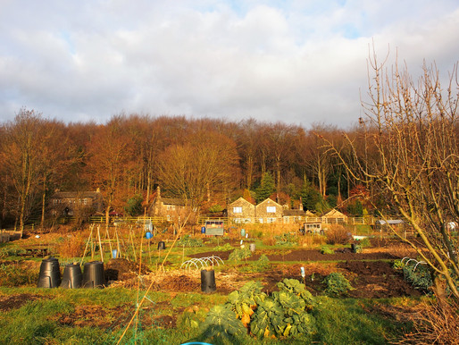 An Allotment in Yorkshire #Nature #Photography