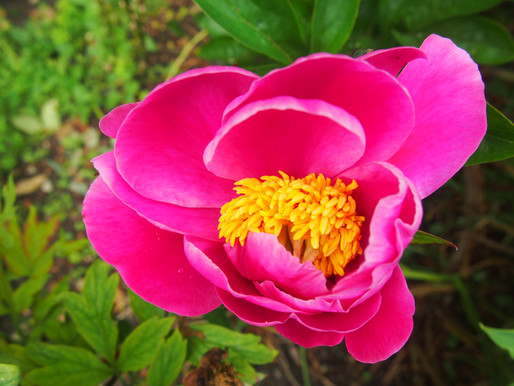 #Flowers in the UK in June by Tiffany Belle Harper