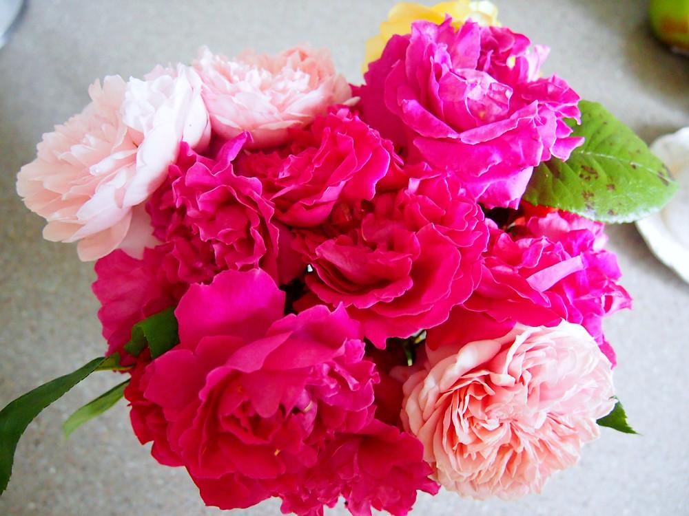 FlowersGardenJuly.JPG