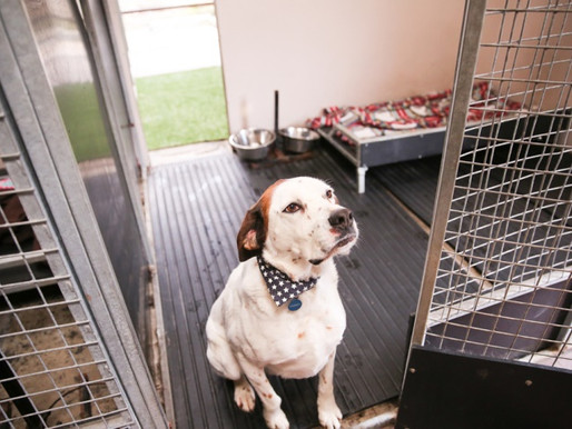 Doggie Dinners Christmas Appeal by Wetnose Animal Aid – Please help us support smaller rescue.