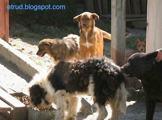 Dogs in the [Ovcha kupel] Hood Guest Blog #Bulgaria