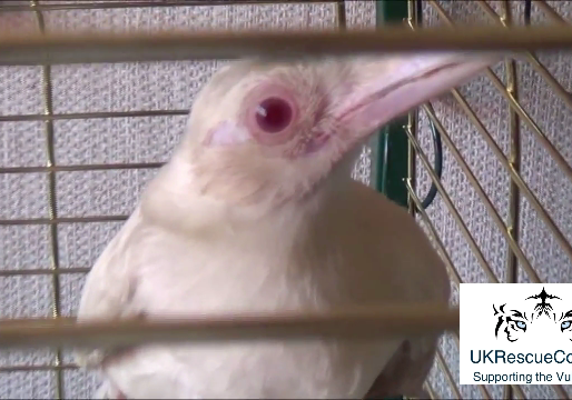 Nuneaton and Warwickshire Wildlife Sanctuary – Albino Roy – The Magpie #Video