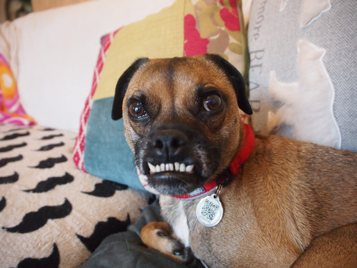 The Road to Freedom – #DogBus Project – Dogs, Cats and animals facing death in shelters