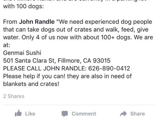 100 dogs need help in L.A. Dobies and Little Paws Rescue.