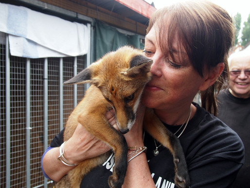 Sooty The Fox and Me