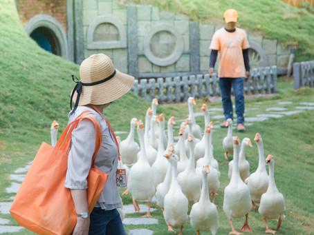 叻丕府  •  曼谷的後花園看萌呆的草泥馬 ✦ 復活島的摩艾石像!