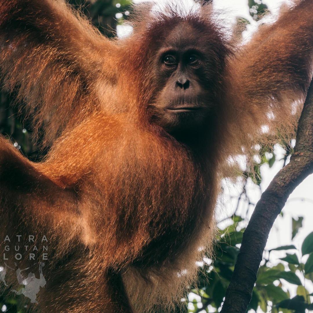 Sumatra-PBLI2237.jpg