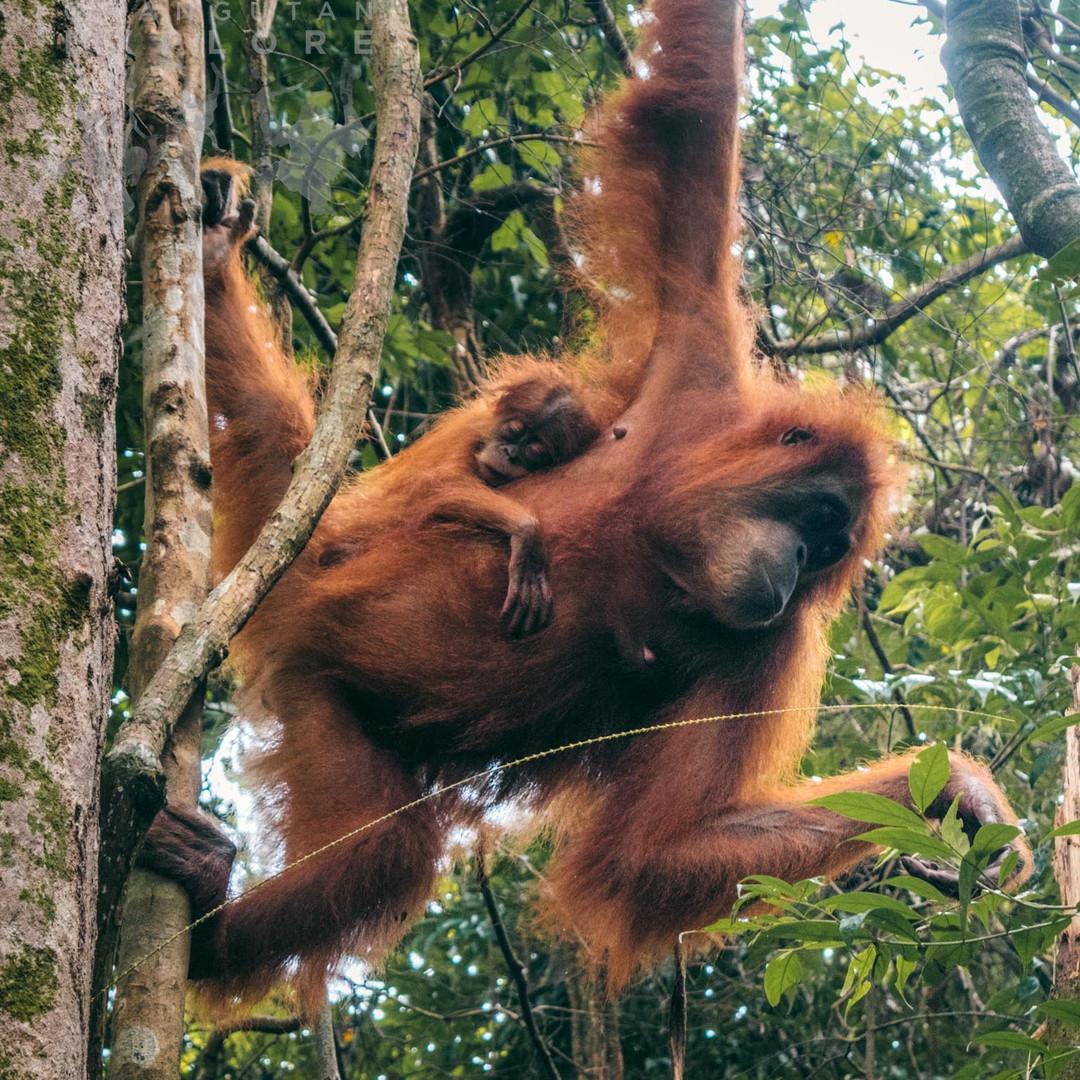 Sumatra-PBLI2163.jpg
