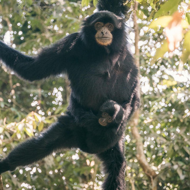 Sumatra-PBLI2478.jpg