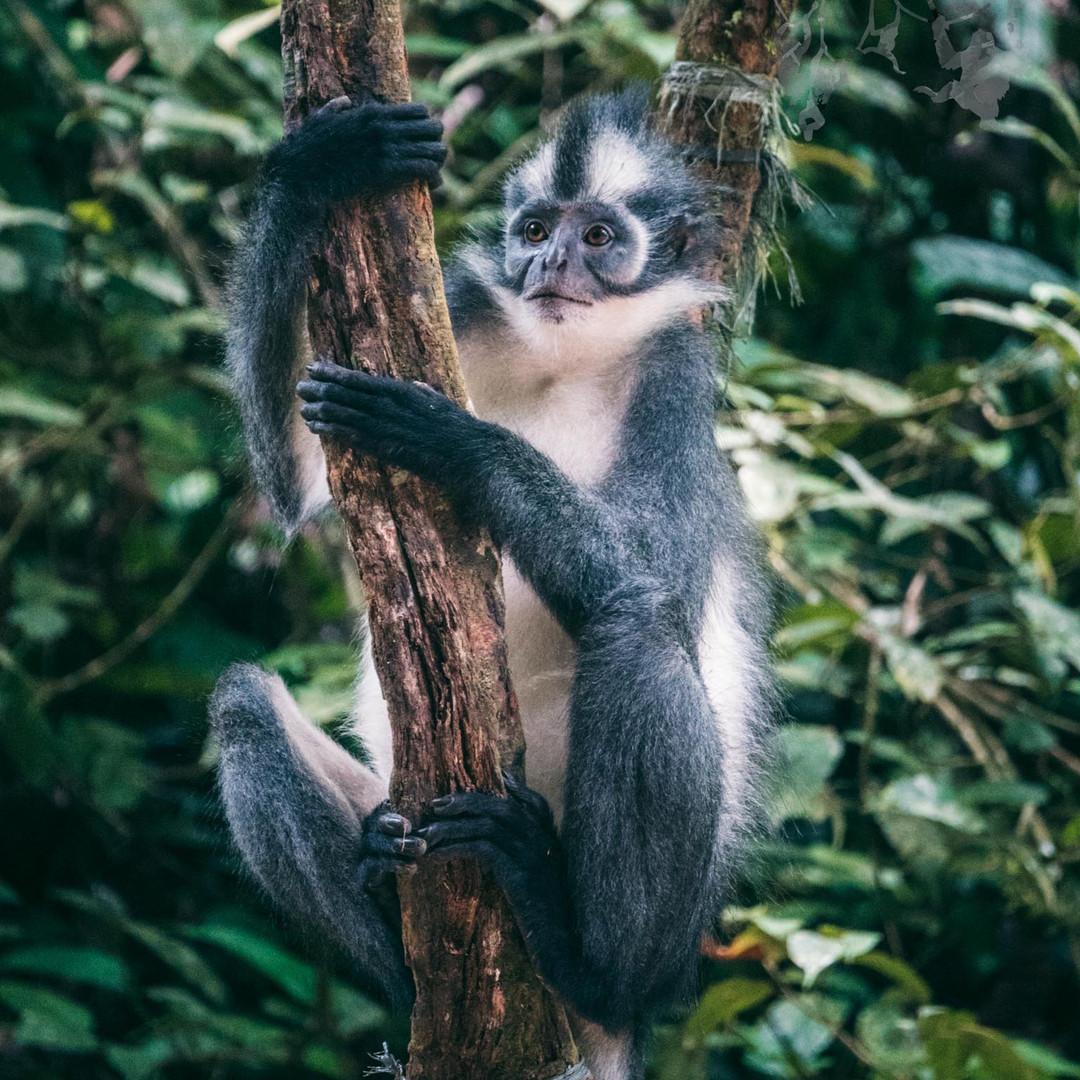 Sumatra-PBLI2402.jpg