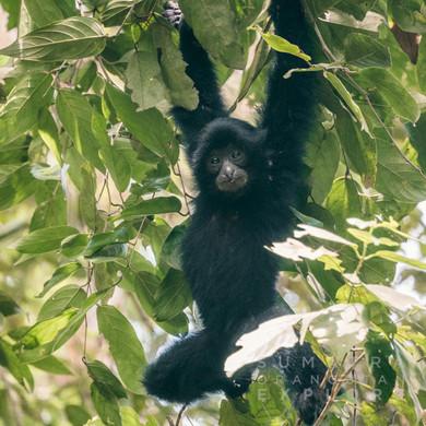 Sumatra-PBLI2515.jpg