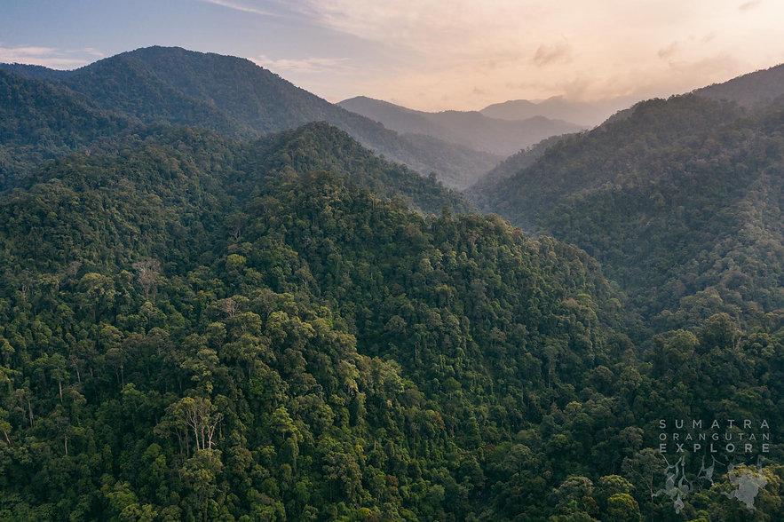 The Gunung Leuser National Park rainforest in North Sumatra, Indonesa