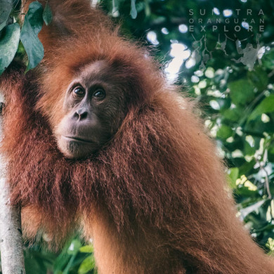 Sumatra-PBLI2231.jpg