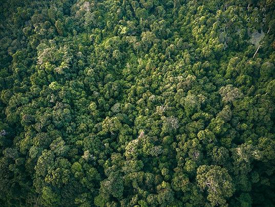 Sumatra-DJI_0412.jpg