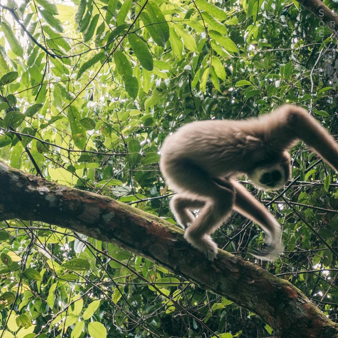 Sumatra-PBLI2062.jpg