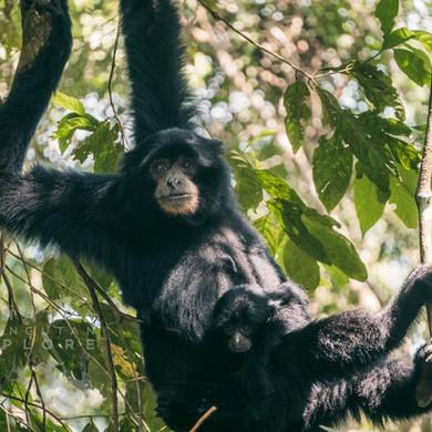 Sumatra-PBLI2481.jpg