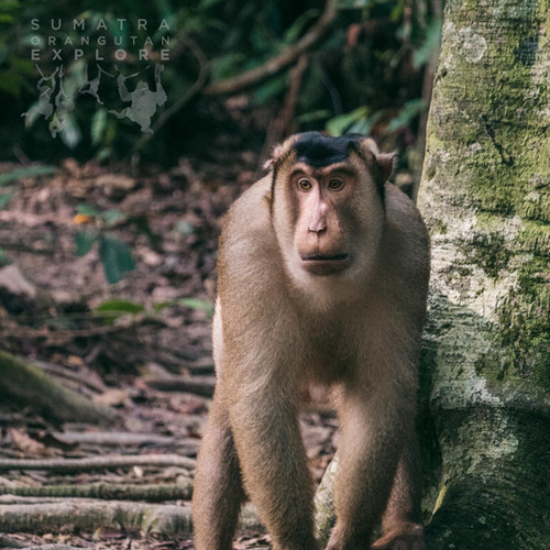 Sumatra-PBLI2312.jpg