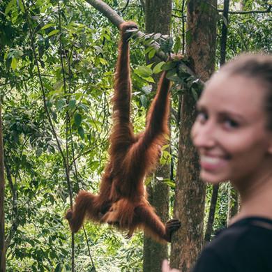 Sumatra-PBLI2270.jpg