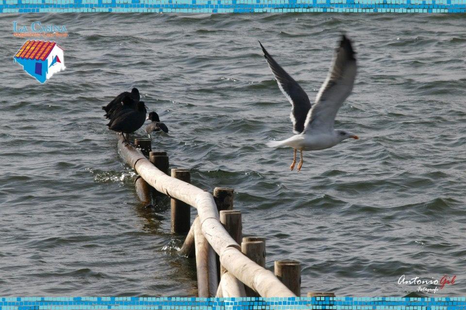 Aves en Alange