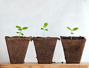 grow pots_edited.jpg