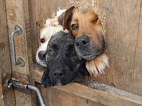 ctwjq-hello-dogs.jpg