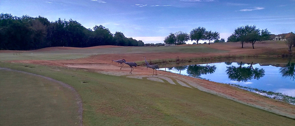 Lake Jovita Country Club Golf Dade City FL