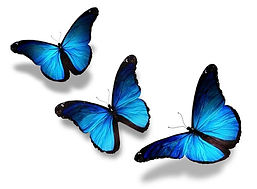 bigstock-Three-Blue-Butterflies-Flying-3