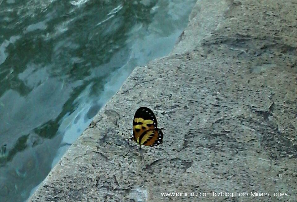 Borboleta entre a pedra e o rio